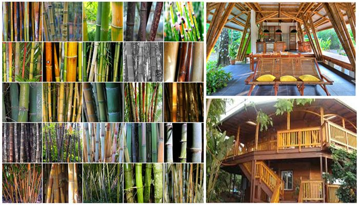 Bamboo One Of Nature S Finest Sustainable Building