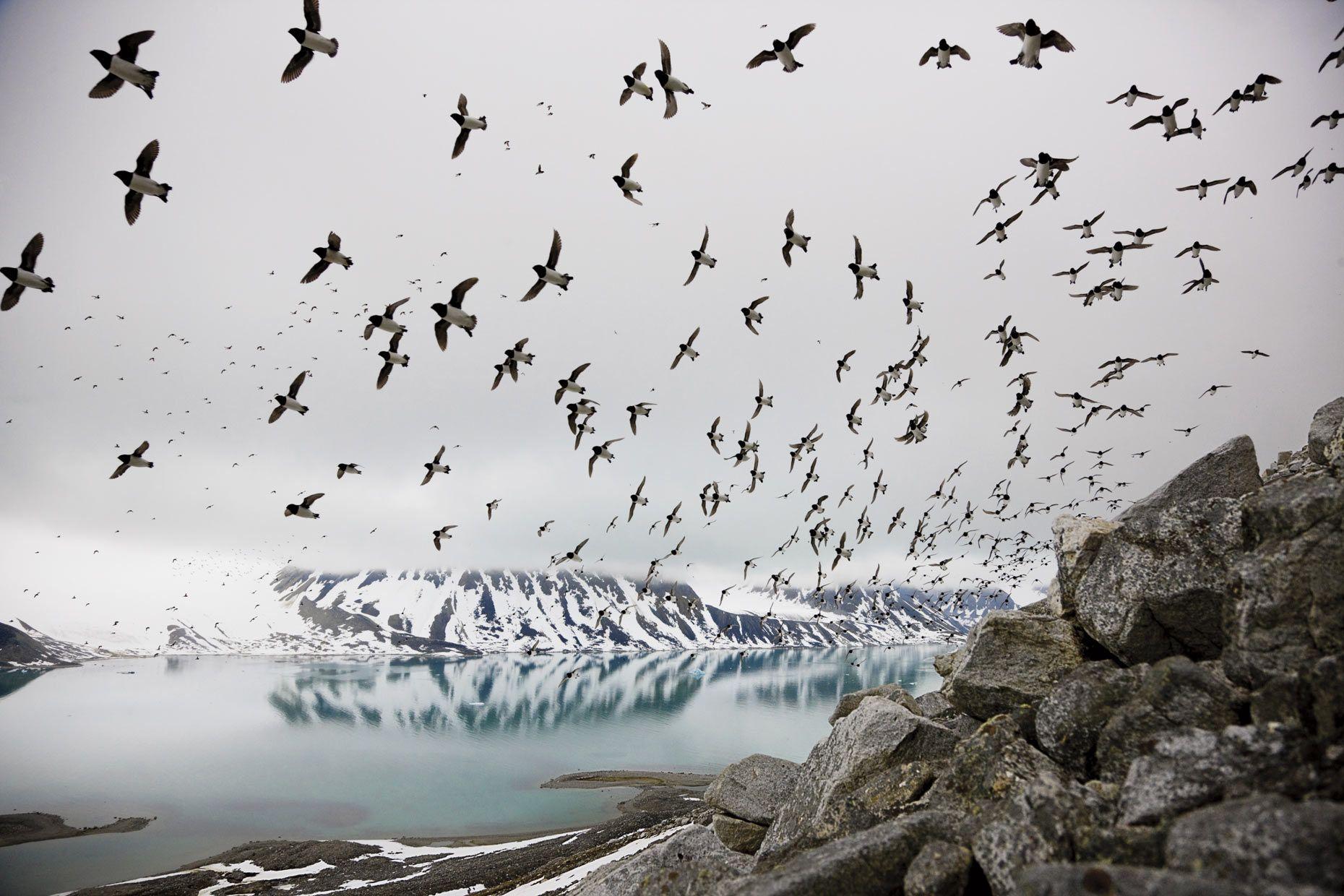 Photographer Paul Nicklen