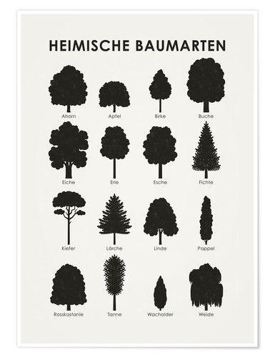 premium poster heimische baumarten garten heimische. Black Bedroom Furniture Sets. Home Design Ideas