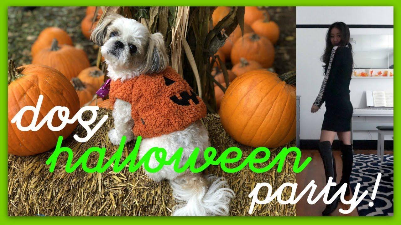 Dog halloween party in san francisco dog halloween bee