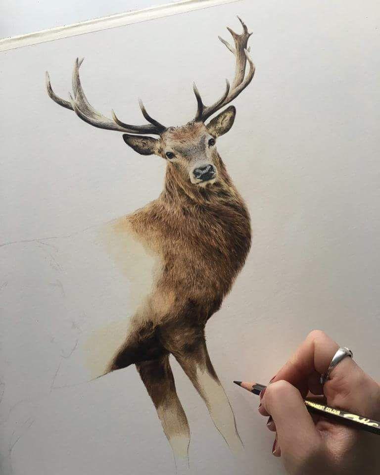 Deer Jessica Lennox Art In 2020 Deer Drawing Animal