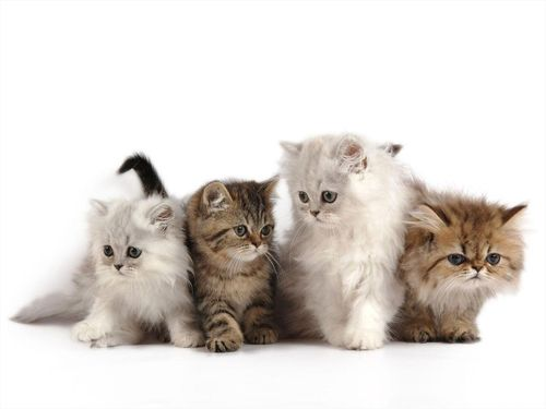 Adorable and Cute Kittens | SocialCafe Magazine