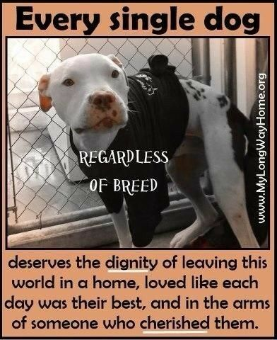 They sure do and it's why I'll always rescue. #animalrescue