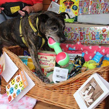Celebrating Sponsor Dog Caffrey S 11th Birthday At Dogs Trust Shrewsbury If You Would Like To Sponsor A Dog Like Caffrey Click Dog Help Dogs Trust Dog Tshirt