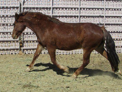 Horse Number: 3223, Image Name:4_IMG_9488.JPG