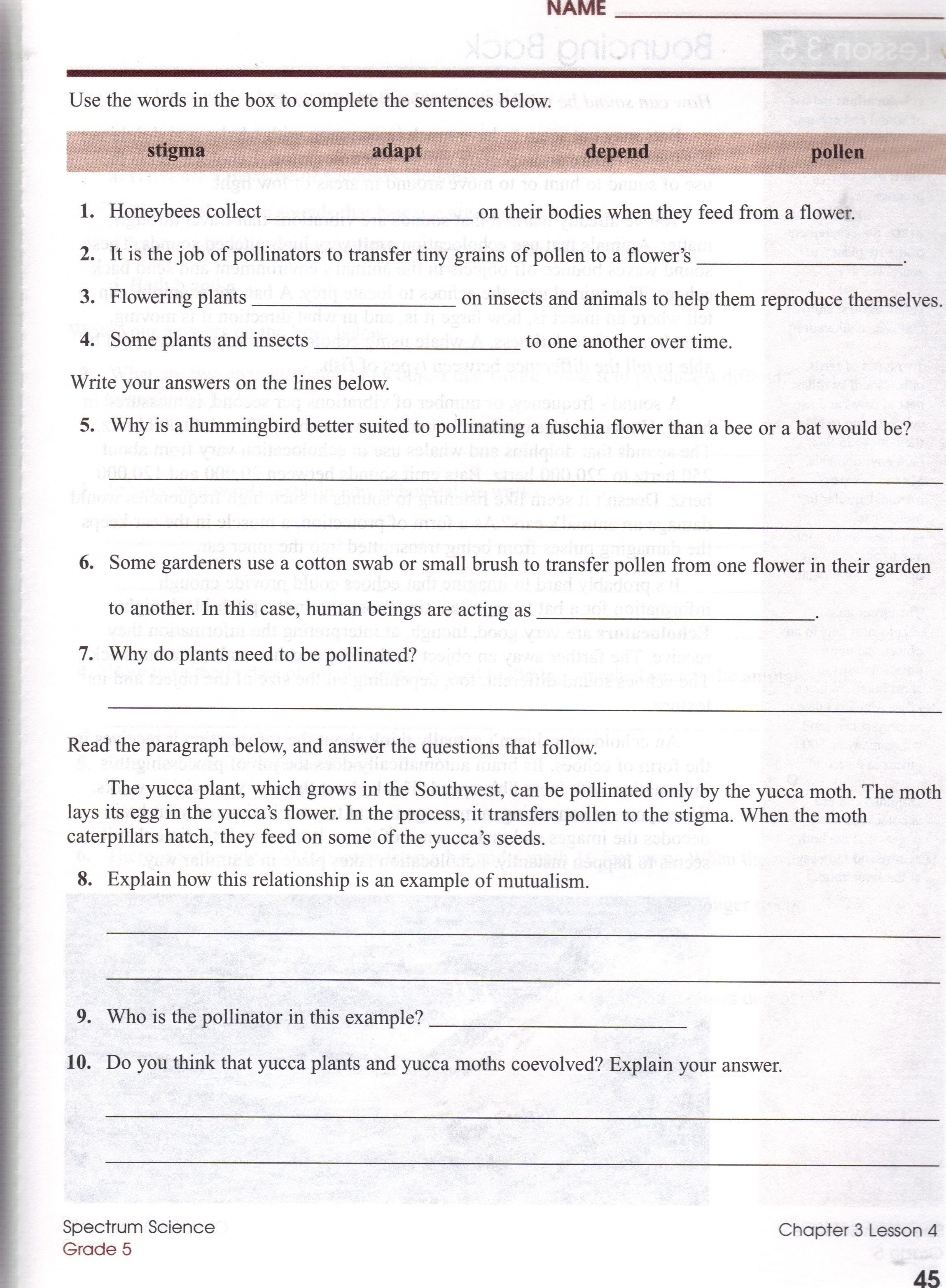 Ecosystem Worksheets Grade 7