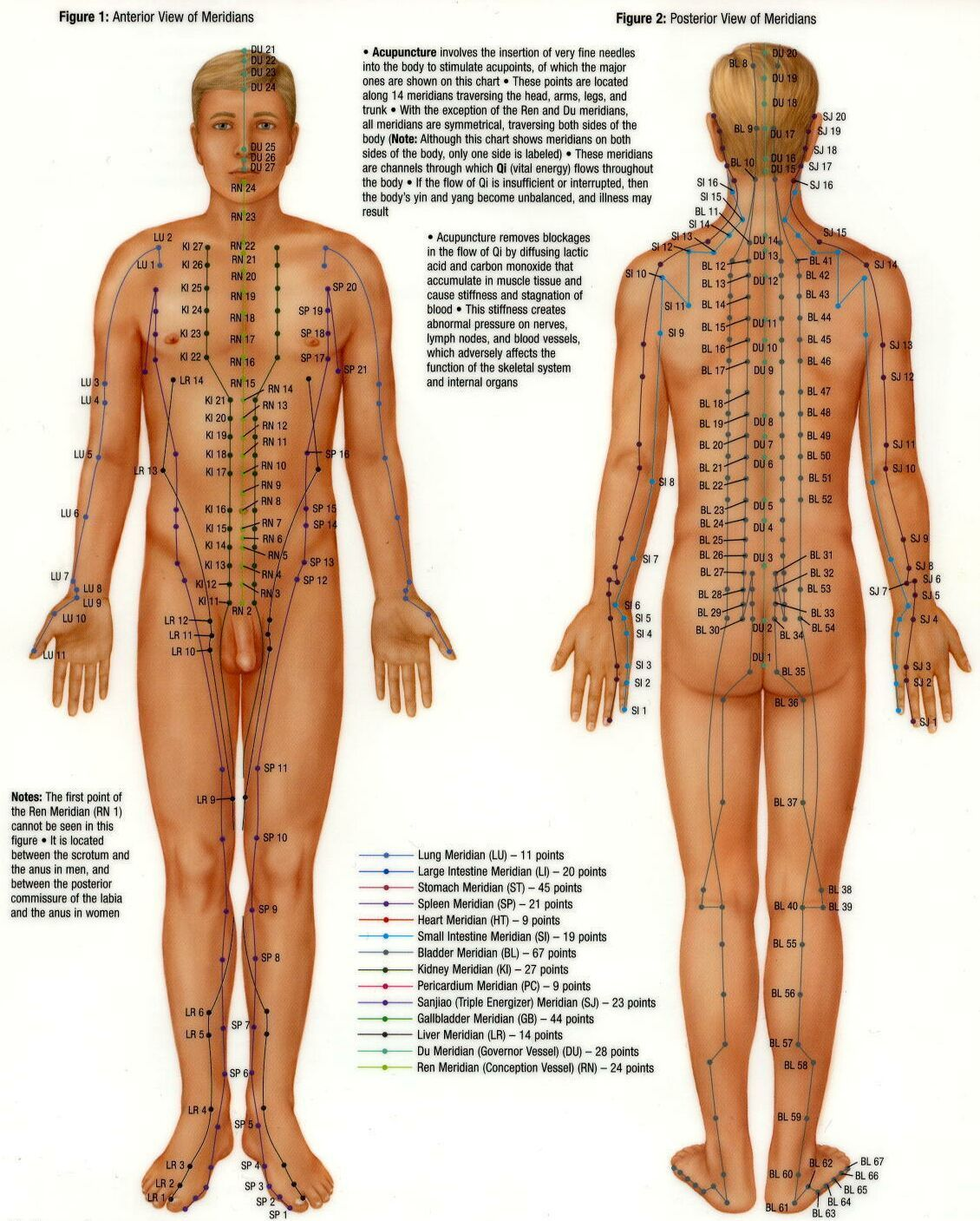 Https S Media Cache Ak0 Pinimg Com Originals 1c A8 19 1ca8192f12db863824014712153c0b08 Jpg Acupuncture Points Acupuncture Points Chart Acupuncture