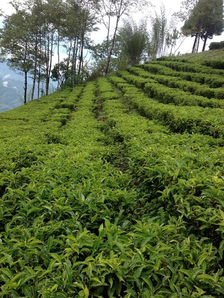 Our tea is grown in the Ilam district in Nepal. Today, it is sunny and rather warm in Ilam with 19°C and little wind. Have a great Wednesday!