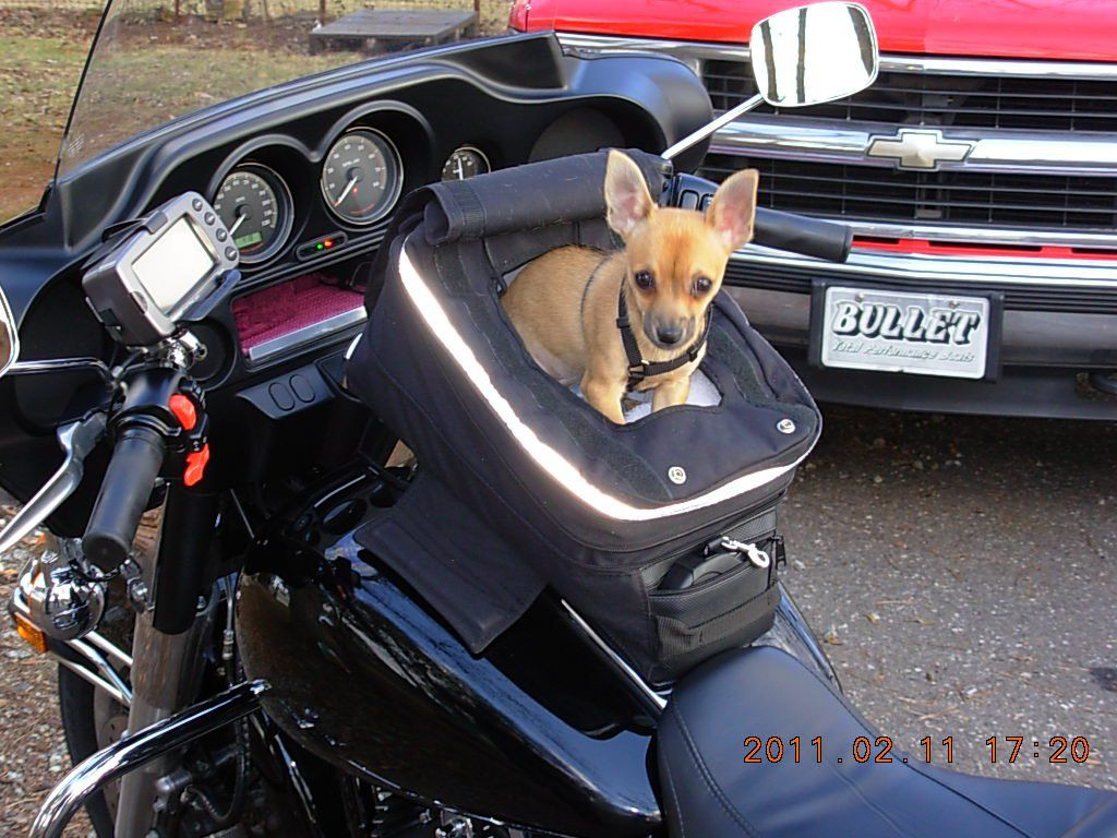 Dogs On Motorcycles Dog Carrier Dogs
