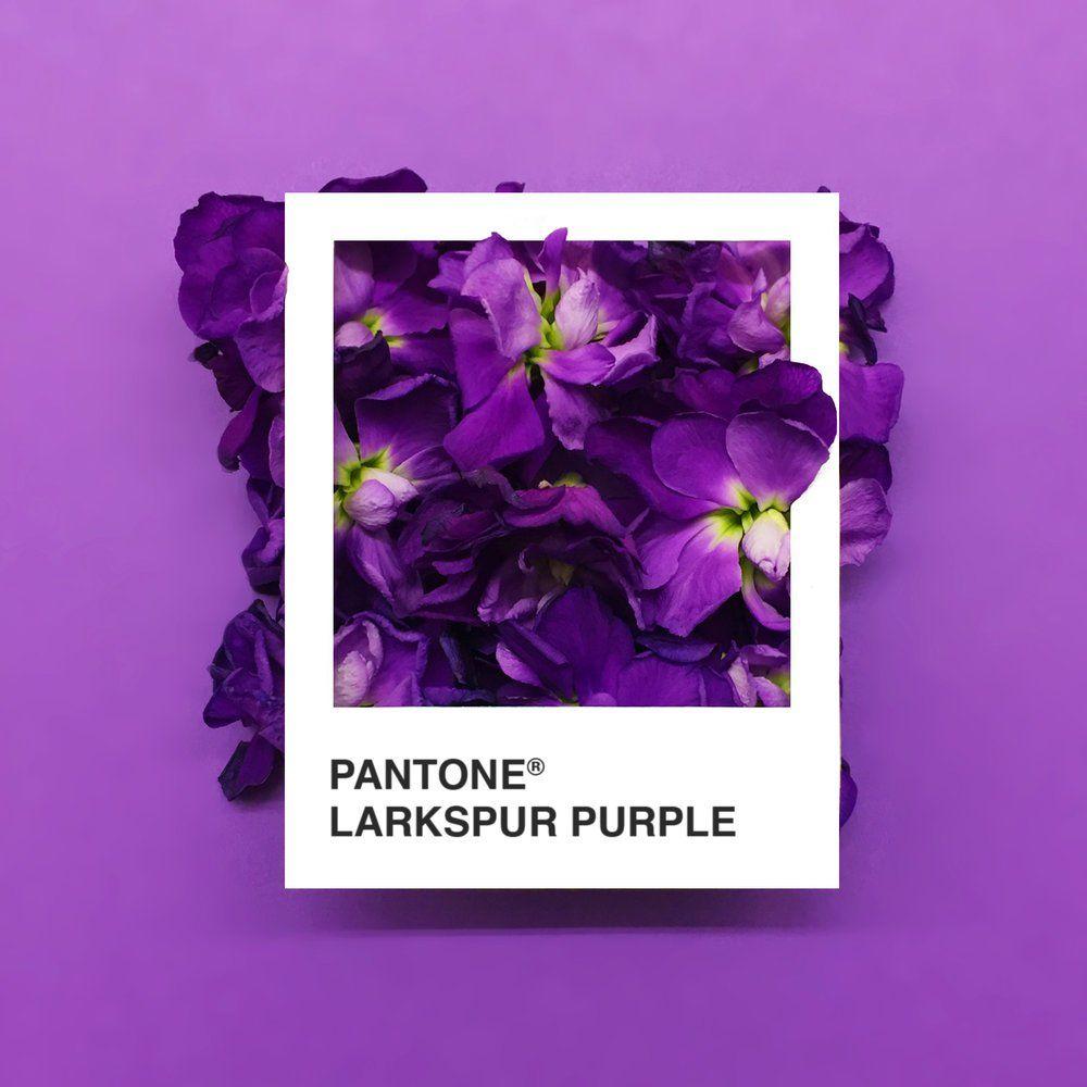 'Pantone Flowers', las flores más bonitas son ahora una paleta de colores (Yosfot blog)