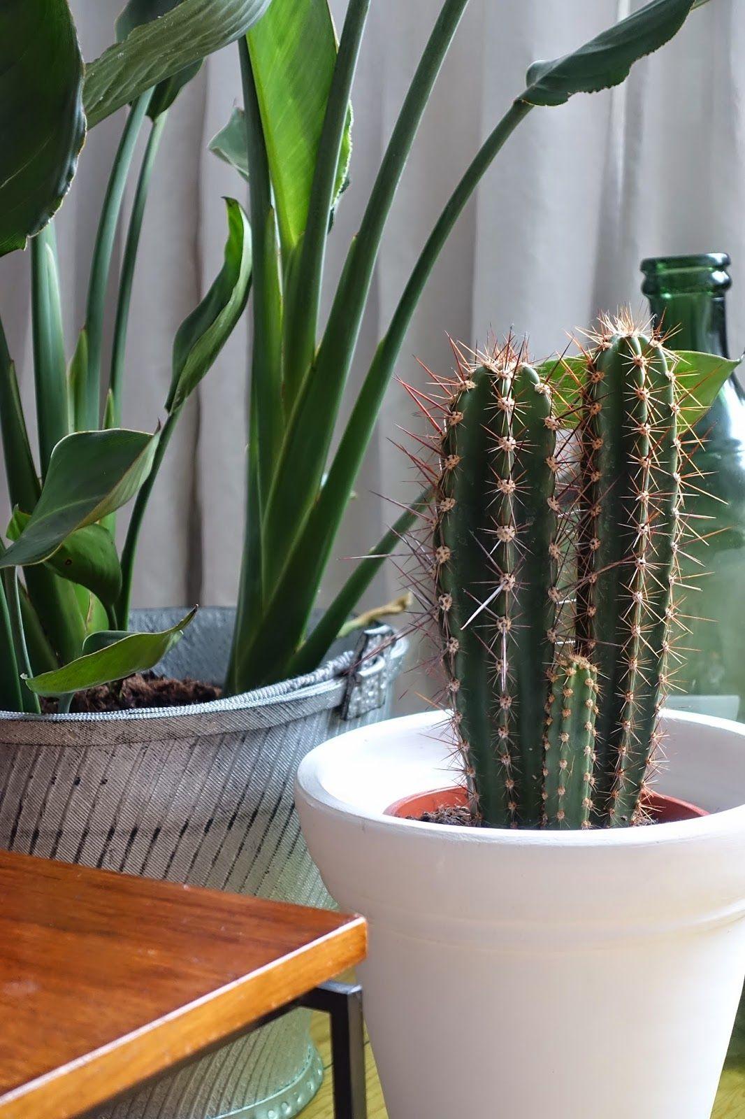 coffee in the sun: Bij mij thuis: groen!