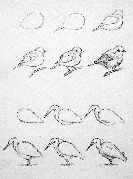 How to draw birds a brief gude free html version page 4 click here to find out more http 1 googydog com