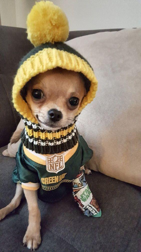 15 Fashion Tips From Chihuahuas