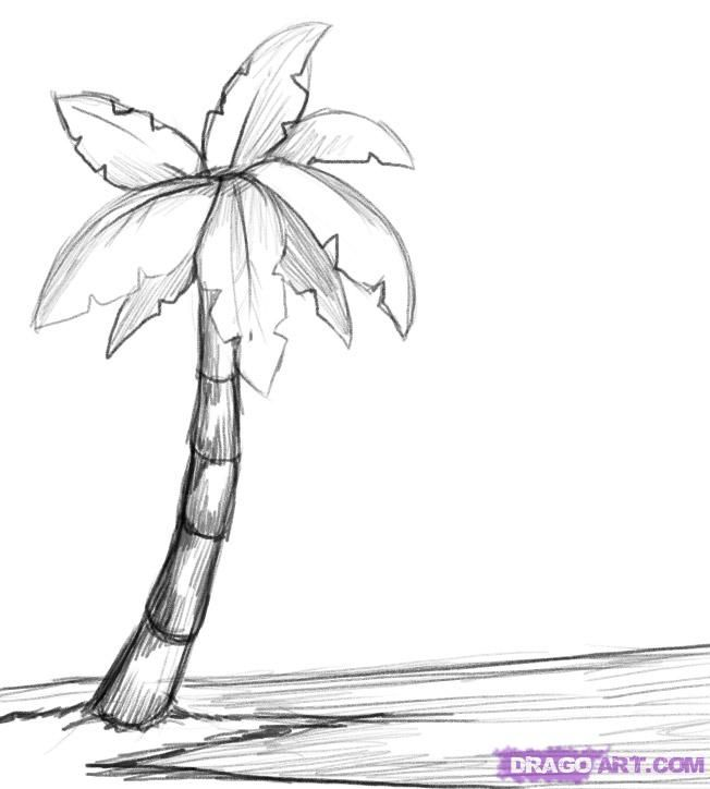 Color It In And You Have Just Finished This Tutorial On How To Draw A Palm Tree Step By Description From Dragoart