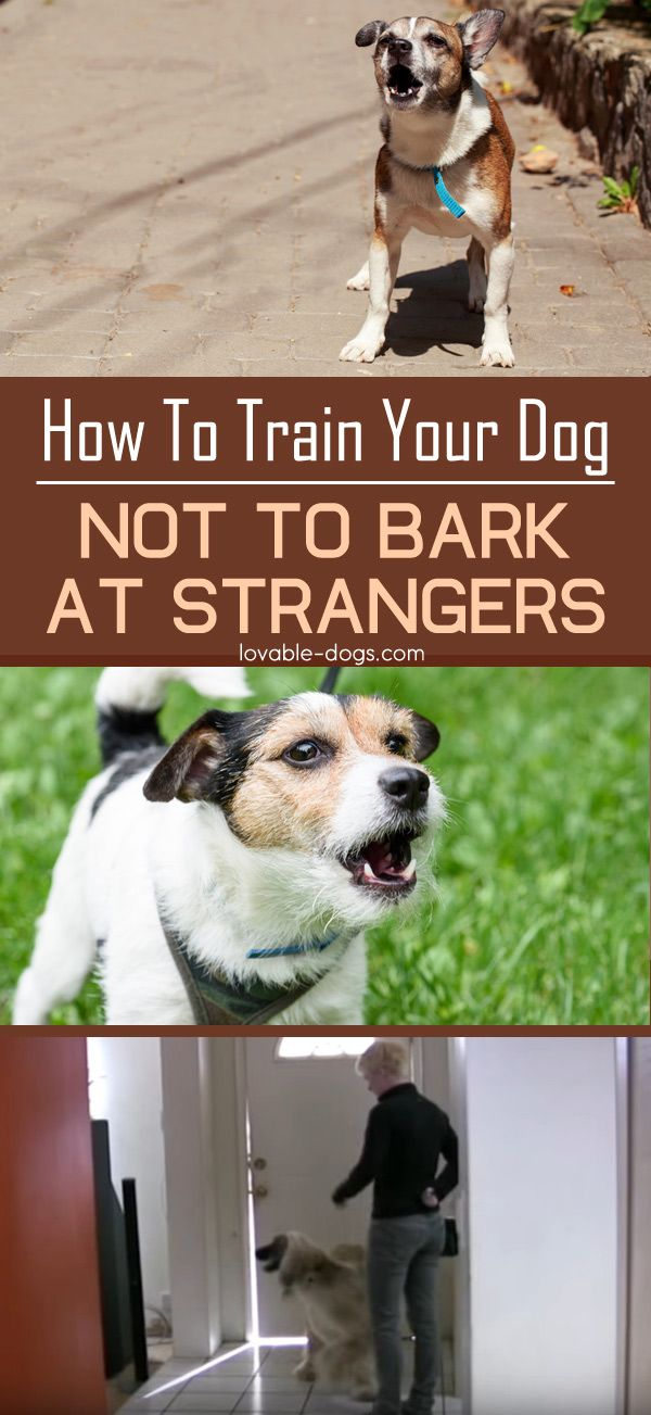 How To Train Your Dog Not To Bark At Strangers Http Lovable