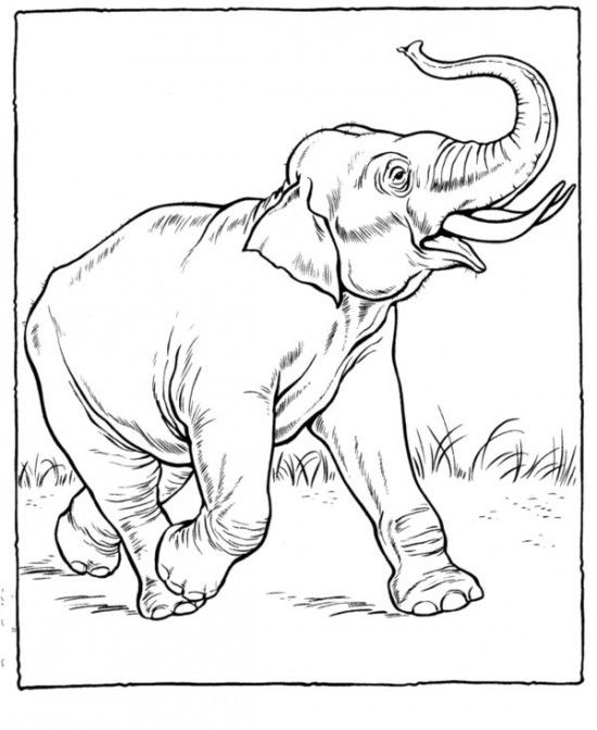 Realistic Coloring Pages Of Animals Coloring Hopefully This Zoo Coloring Pages Can Make T Elephant Coloring Page Zoo Coloring Pages Zoo Animal Coloring Pages
