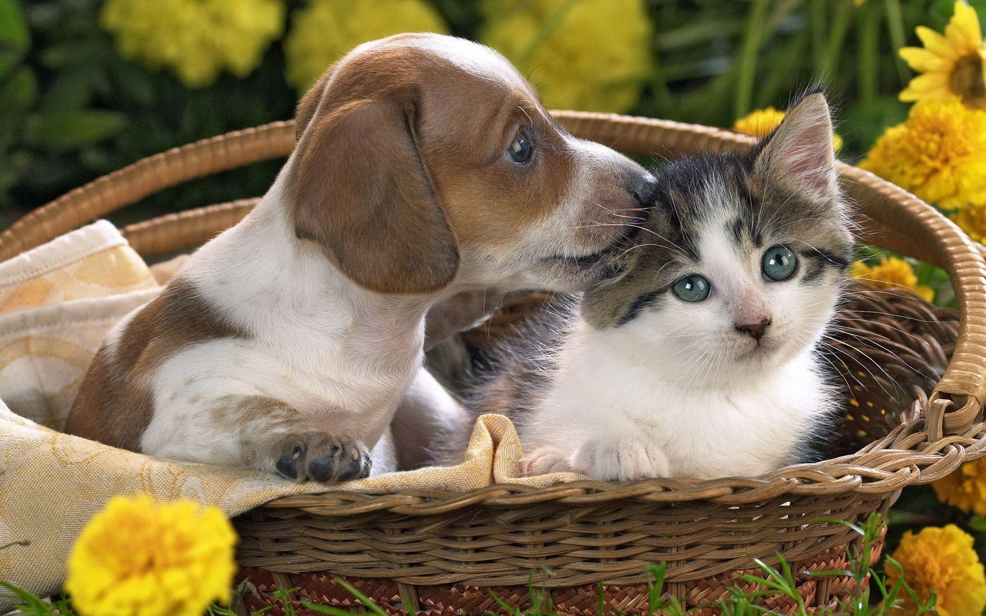 kitten and puppy - The Cutest Kittens   Kyna's stuff   Pinterest ...
