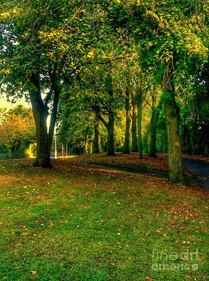 Chorley Photograph - Autumn Walk 2 by Joan-Violet Stretch