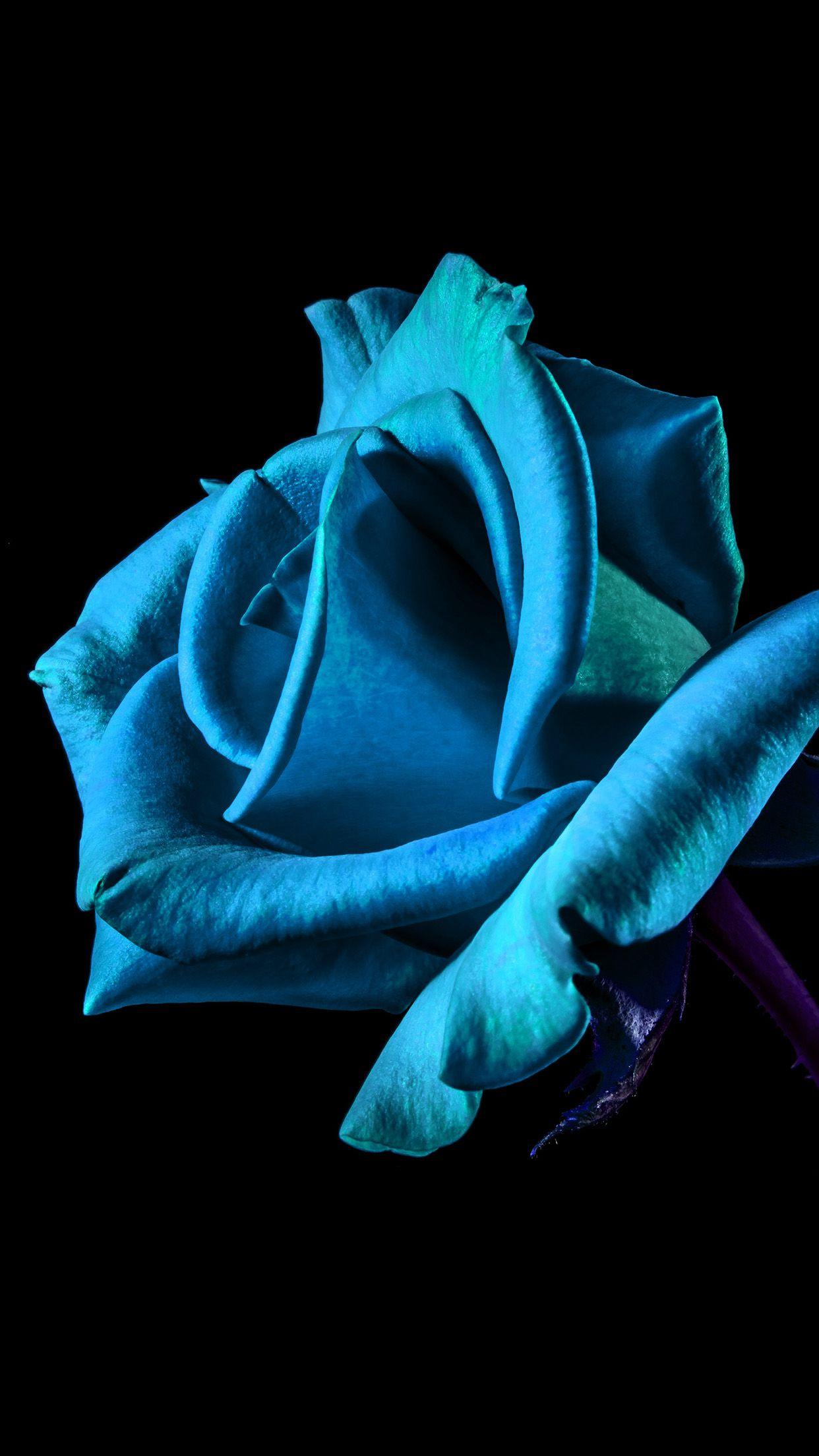 Flower Rose Blue Dark Beautiful Blue Wallpaper Iphone Best Nature Wallpapers Nature Iphone Wallpaper
