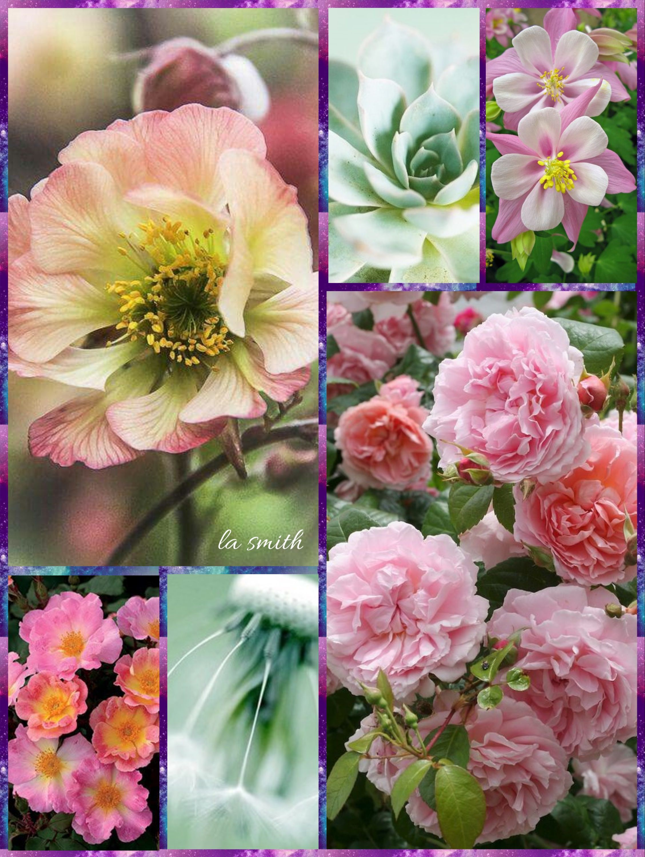 Passionate For Pink By La Smith