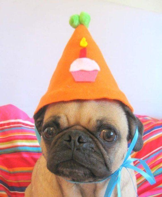 Happy Birthday Pet Hat