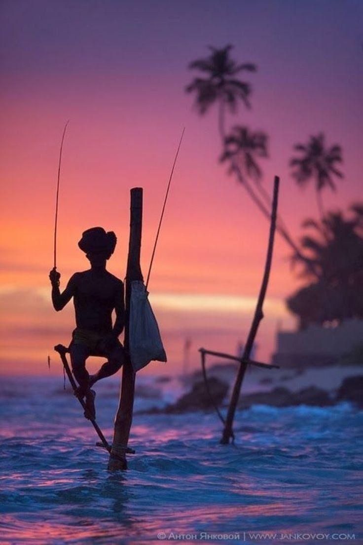 Pole Fishing . Sri Lanka