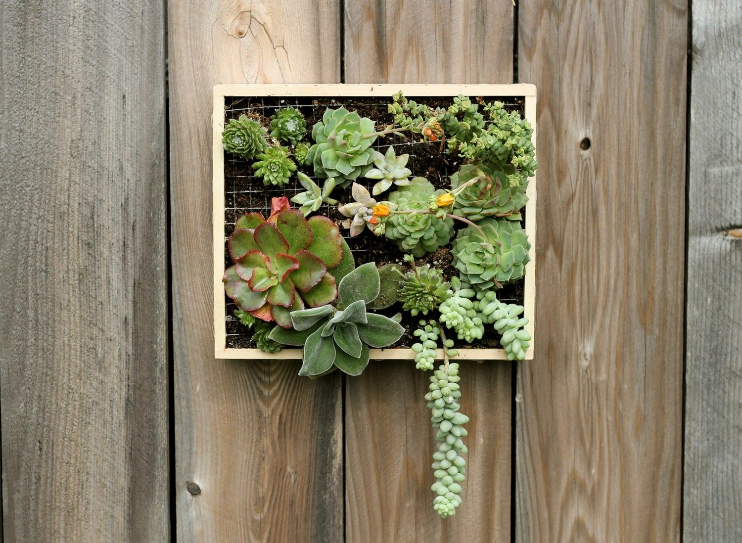 Step By Step PDF Instructions: Wall Mounted Succulent Garden. $5.00,