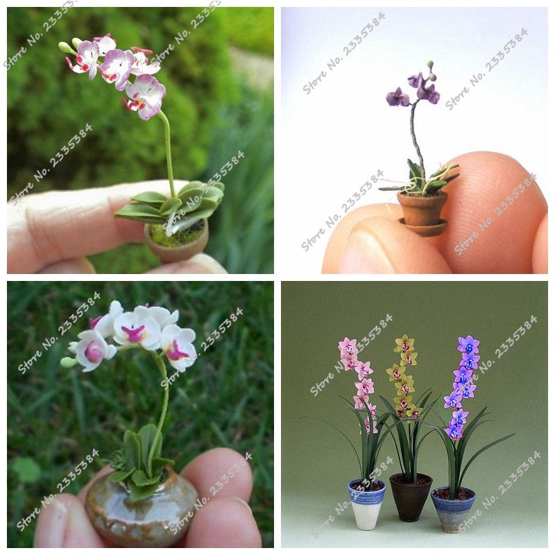 Cheap 100 Unids/bolsa Mini Raras Semillas de Orquídeas Cymbidium ...