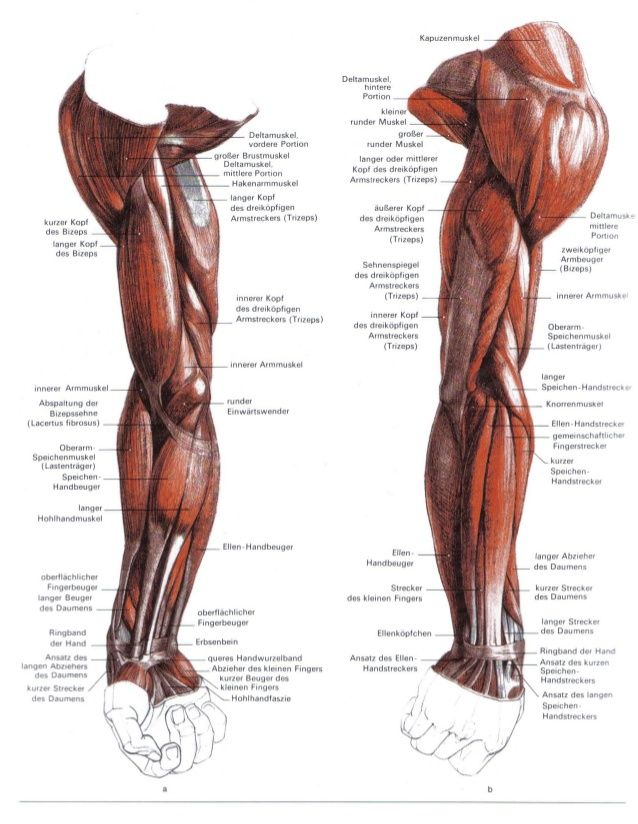 gottfried bammes - Google Search | anatomy ref | Pinterest | Anatomy ...