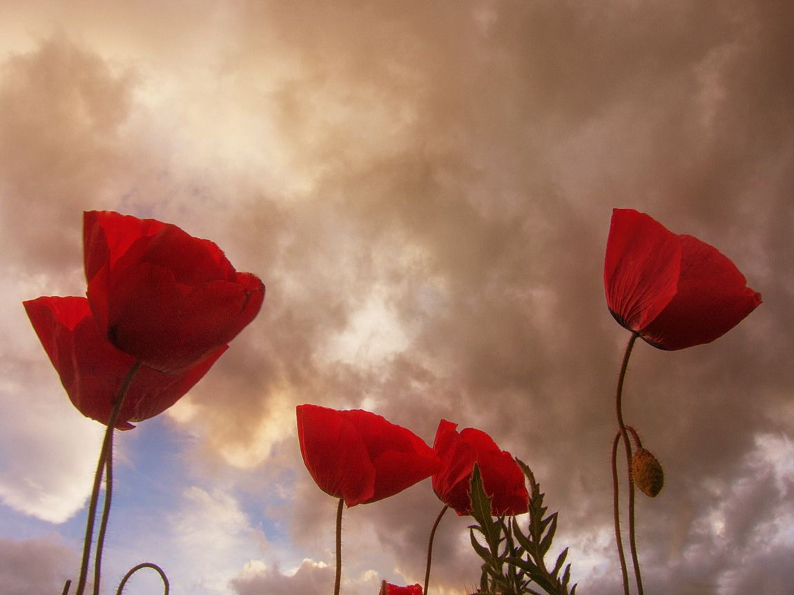 Easter poppies by Christos Lamprianidis on 500px