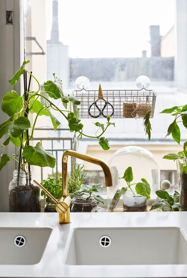 Create your own window garden to grow herbs and salad leaves | Home on kitchen window seating ideas, kitchen window decor ideas, kitchen window backsplash ideas, kitchen window shelf ideas, kitchen window casing ideas, kitchen window lighting ideas, kitchen window cabinet ideas,