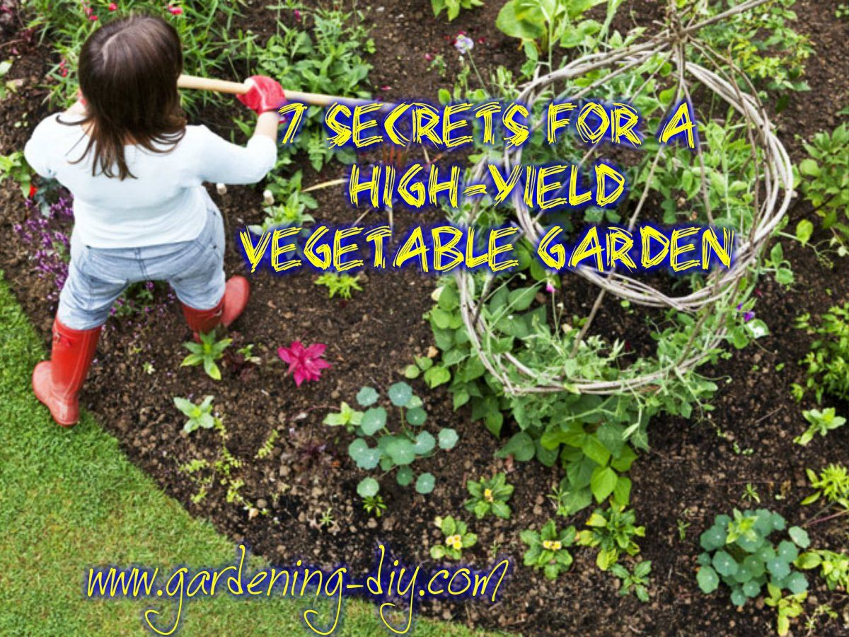 7 Secrets For A High Yield Vegetable Garden Beautiful Organically Grown Vegetables Fro Organic Vegetable Garden Veggie Garden Container Gardening Vegetables