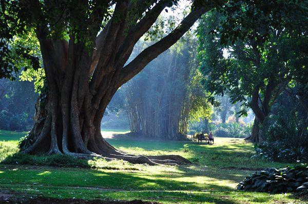 1cae6e07cce9cb9fd64ac361dfe15b97 - Student Accommodation In Botanic Gardens Durban