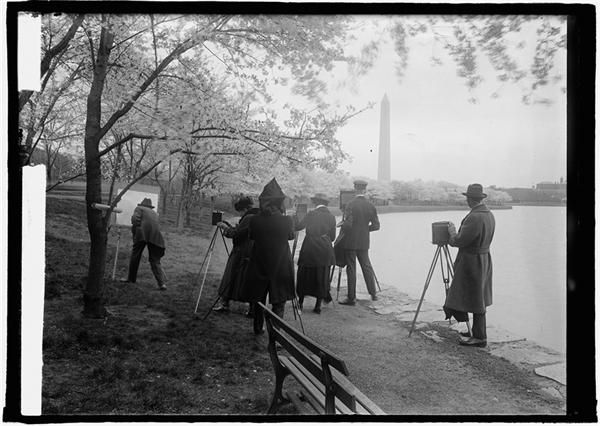 On March 27 1912 The First Cherry Blossom Trees Are Planted In Dc The Japanese Cherry Trees Were A Gift From Mayor Yukio Photo Pictures Japanese Cherry Tree