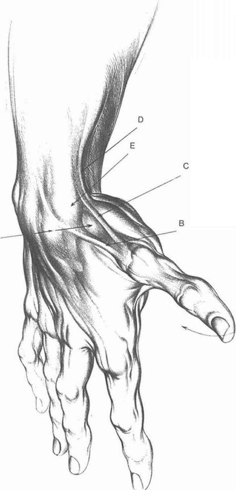 Devons anatomy lesson