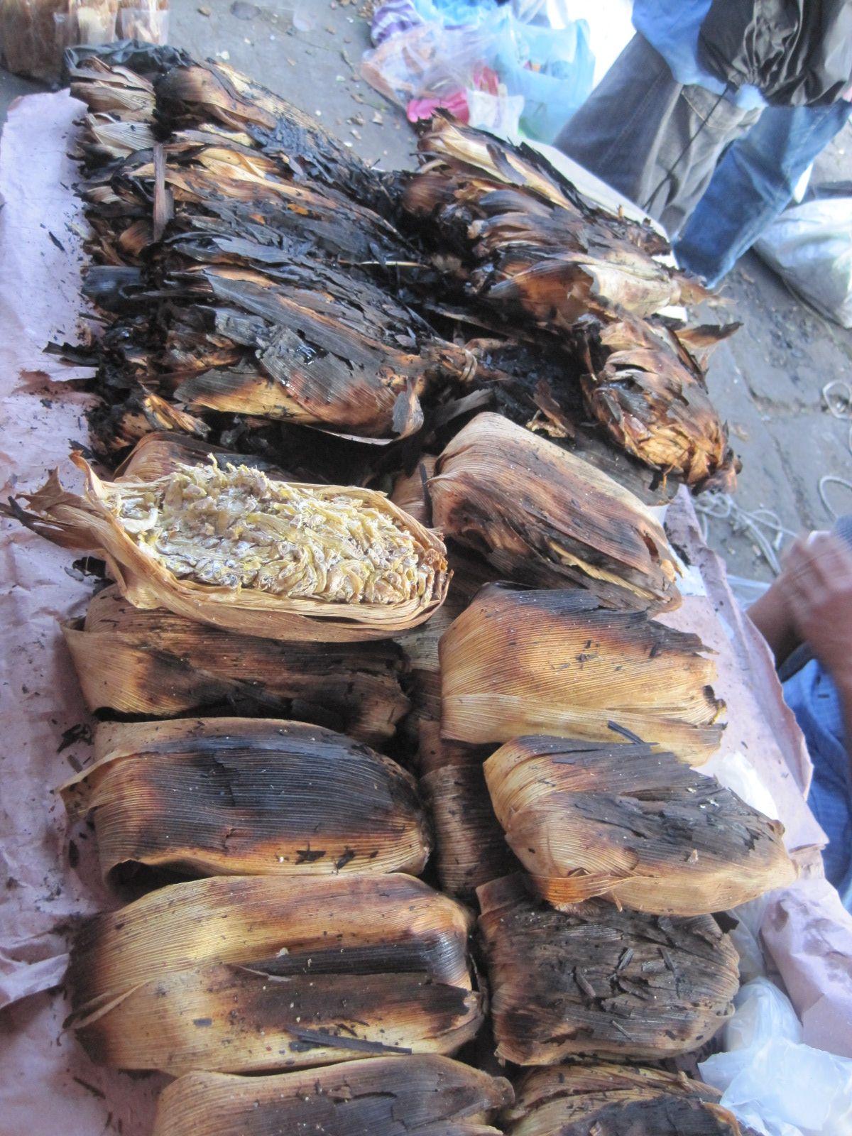 Charales fish