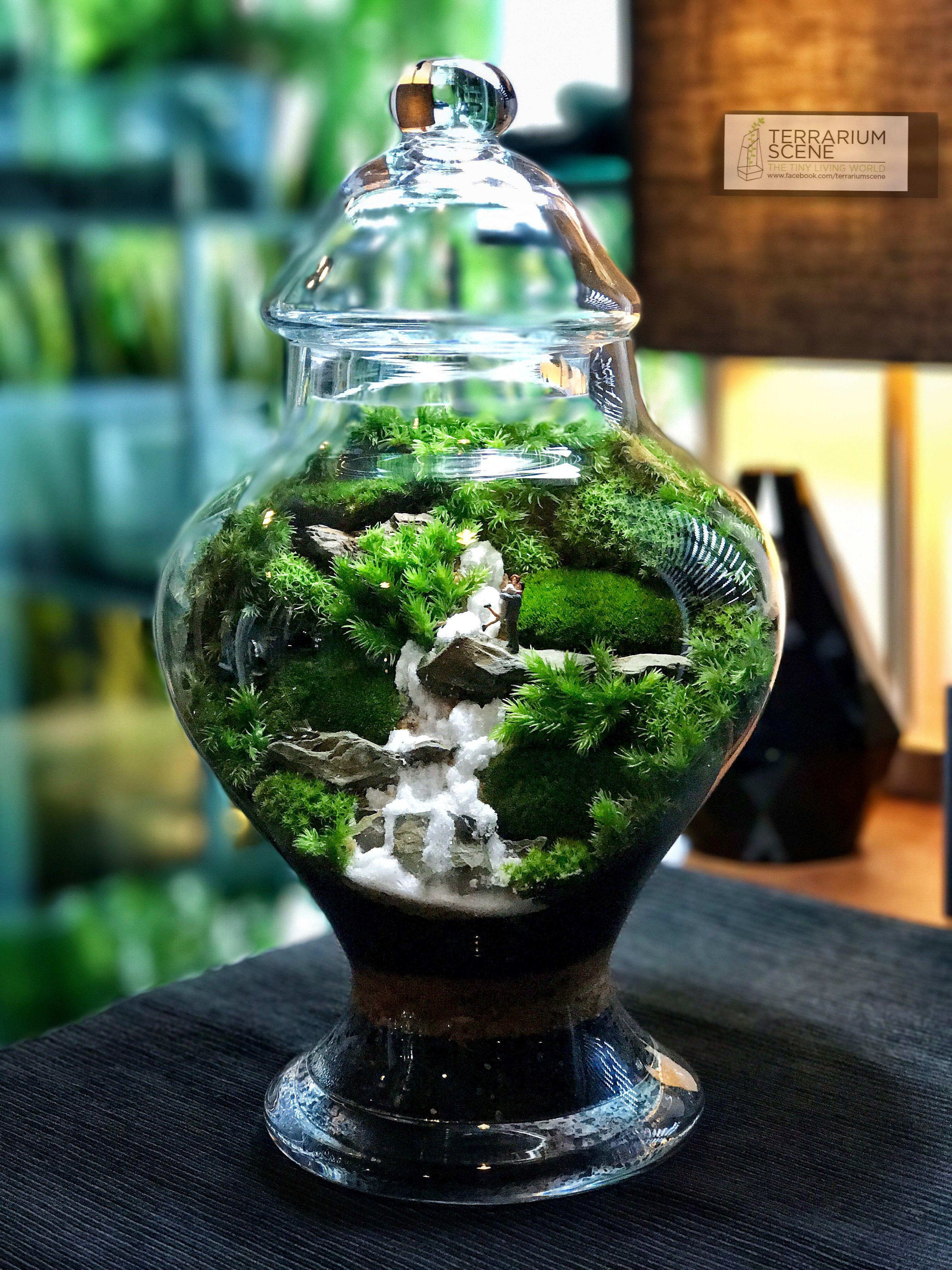 Terrarium Scene, Terrariums, Gardens, Moss Garden, Bonsai, Plants, Terrarium, Outdoor