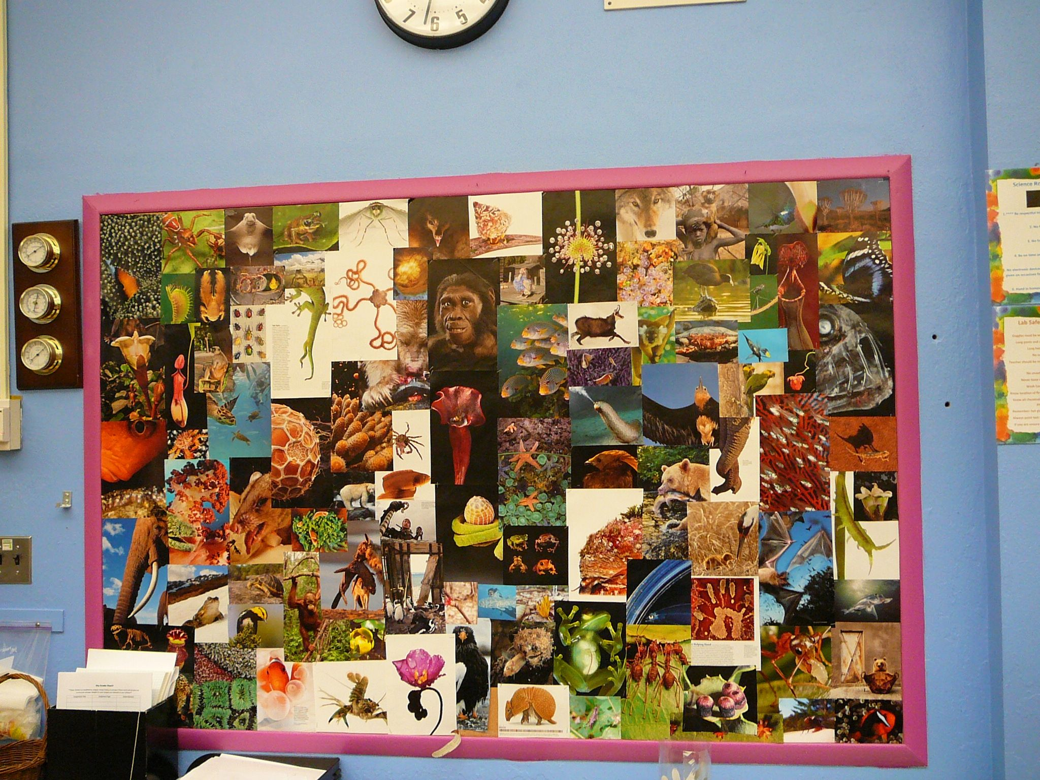Classroom Design Hacks ~ Biology themed collage bulletin board things i ve made