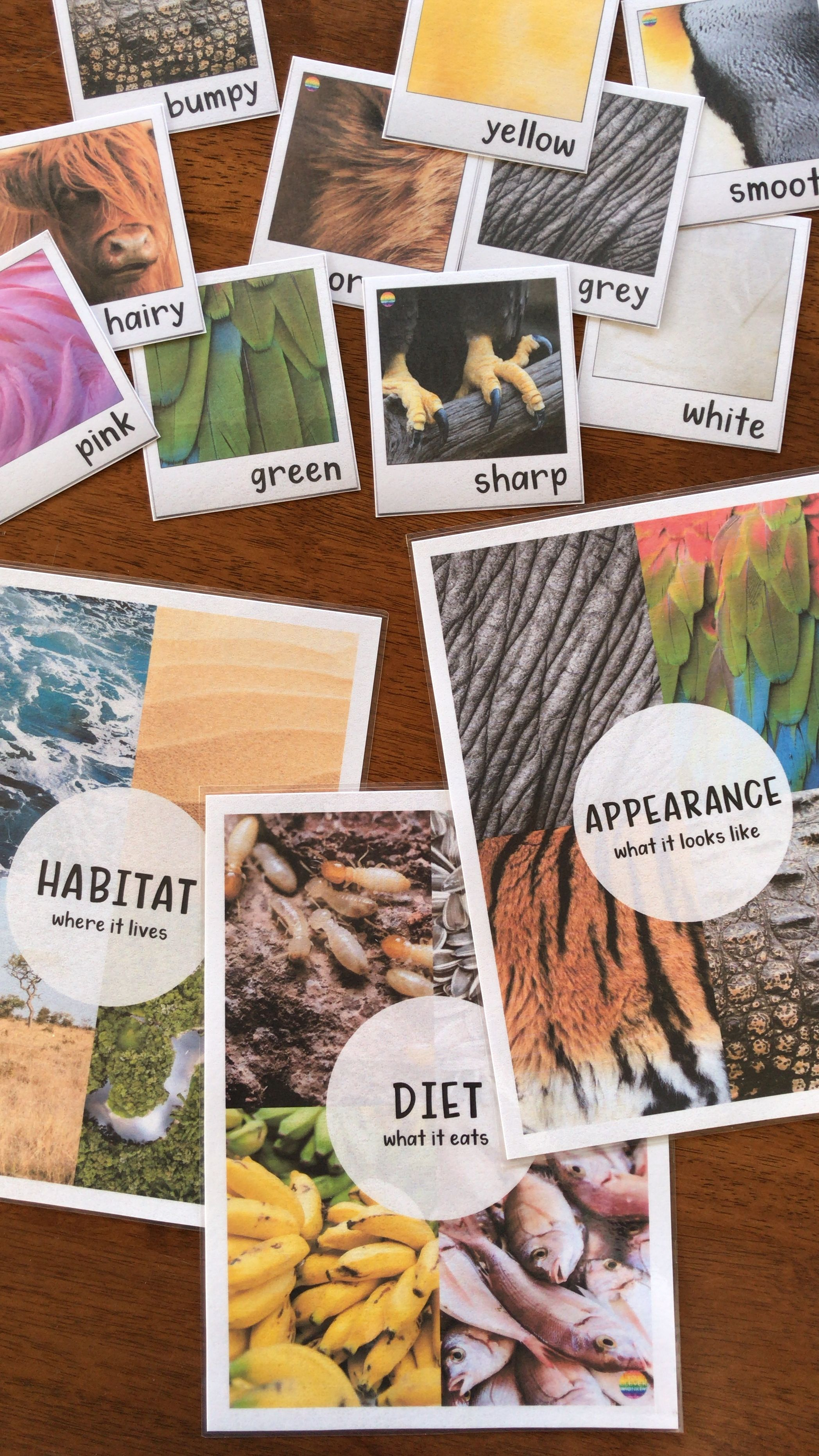 Build Your Students Vocabularies With These Animal Adjective Posters Perfect