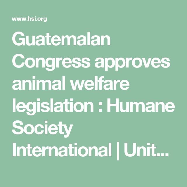 Guatemalan Congress Approves Animal Welfare Legislation Humane Society International United Kingdom Animal Welfare Animals Animal Protection