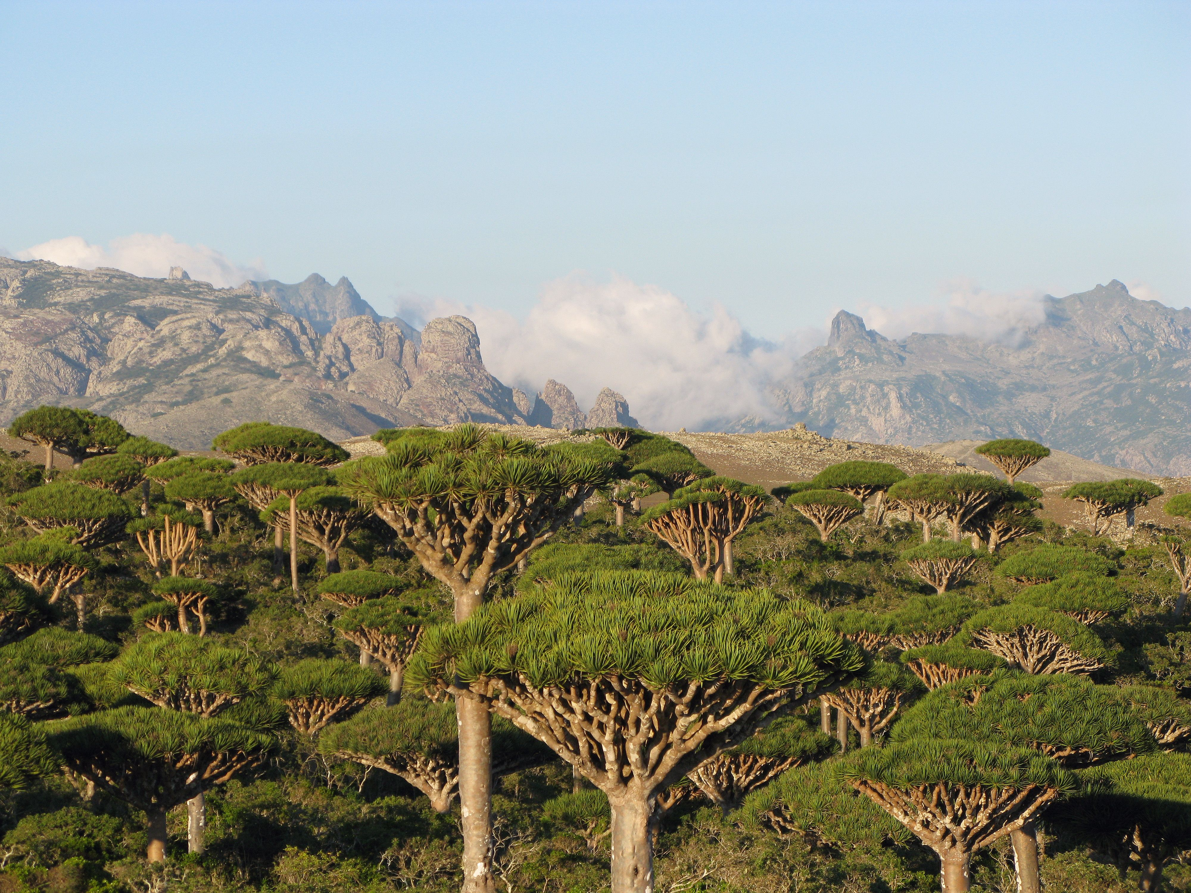 Socotra Island Eco Tours