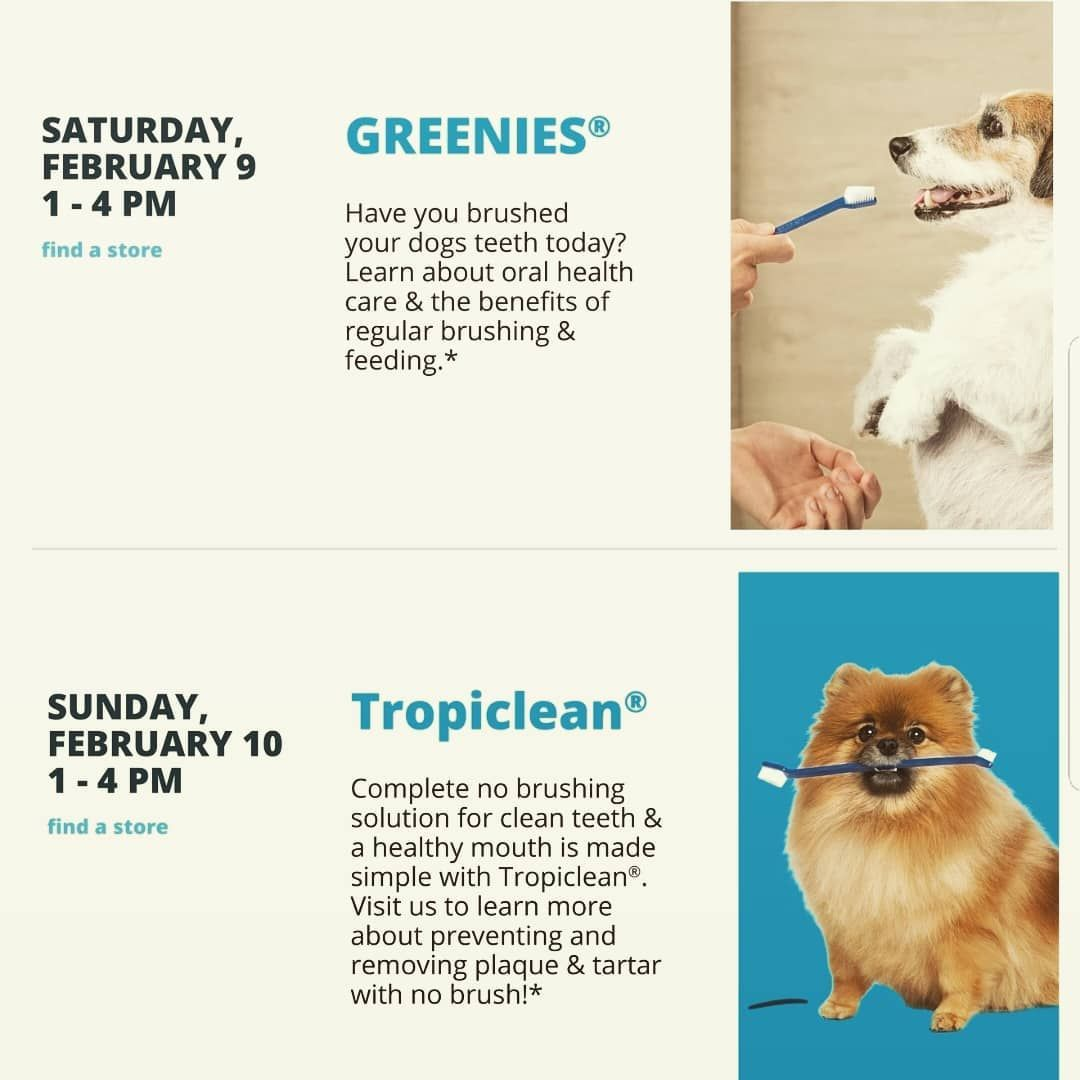 Want Great Oral Solutions To Keep Your Dog Happy And Healthy