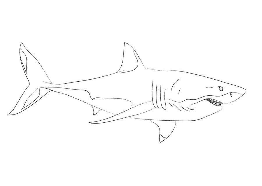 weißer hai zum ausmalen  malvorlagen