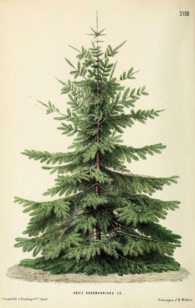 Free Printable Tree Christmas Tree Decorations Vintage Christmas Christmas Decorations