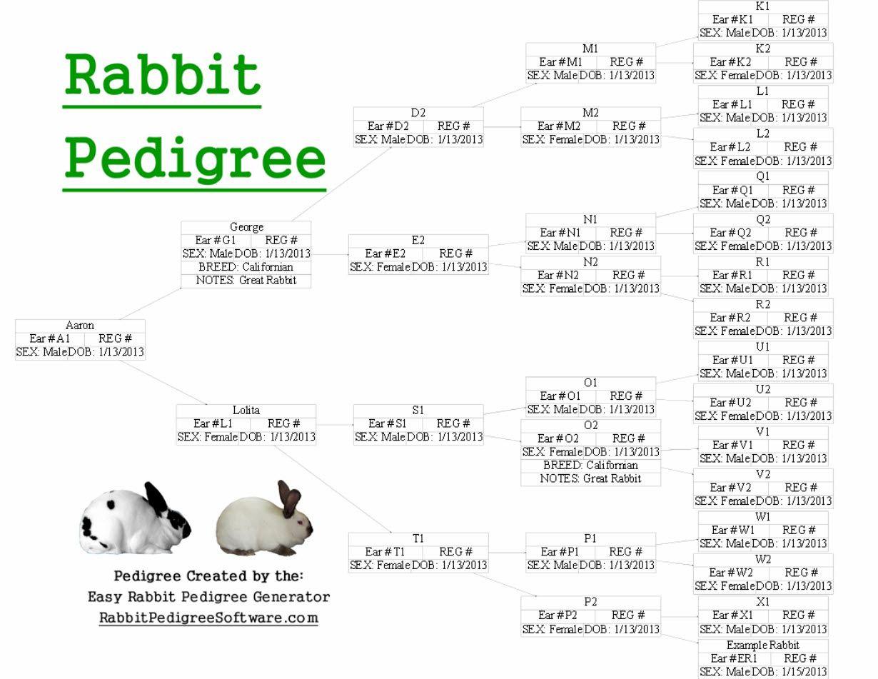 Rabbit Pedigree Created Using The Easy Generator