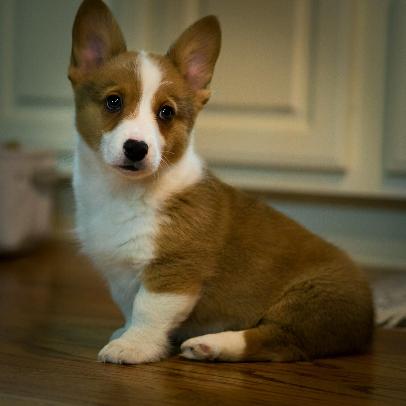 The Young Pupper http://ift.tt/2qOFEgo