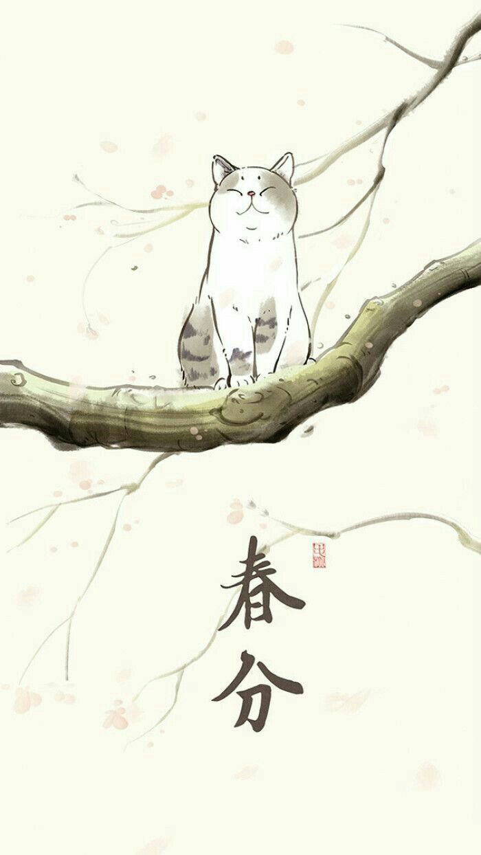 Pin By Trinitrotoluene On Cathetics Pinterest Cat Wallpaper And
