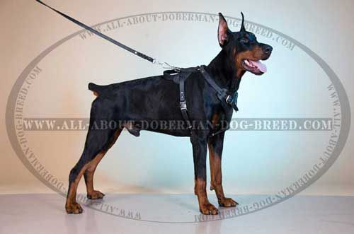 Adjustable Leather Dog Harness For Doberman Training And Daily