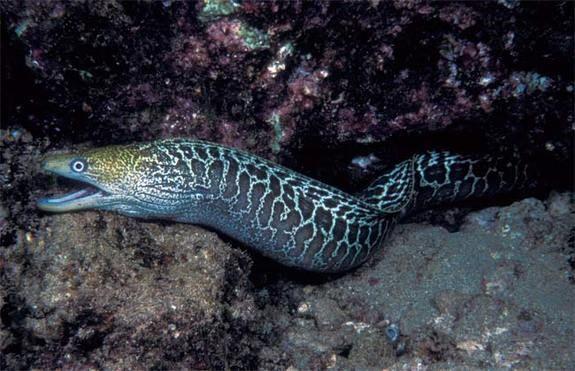 Dangers In The Deep 10 Scariest Sea Creatures Scary Sea Creatures Sea Creatures Ocean Creatures