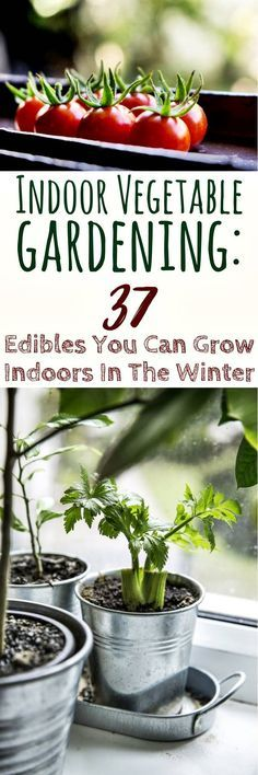 Indoor Vegetable Gardening: 37 Edibles You Can Grow Indoors In The Winter #apartmentgardening